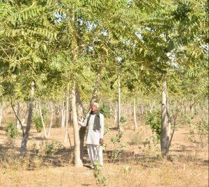 How to grow a Tree with Just 1 litre Water in its Entire Lifespan, learn from this Padma Shri Awardee.